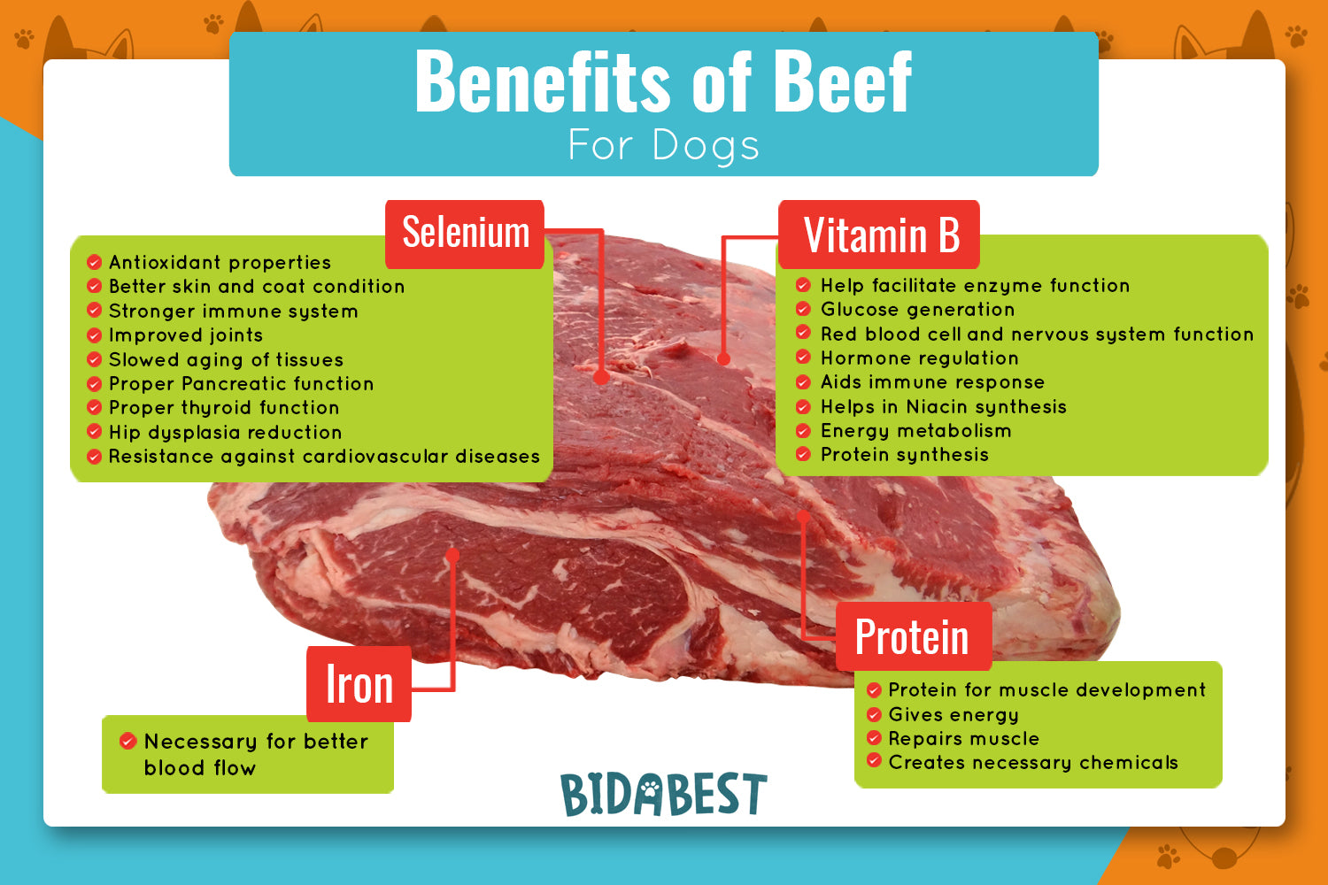 Benefits of beef for dogs