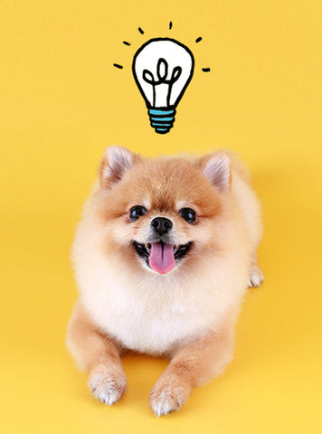Puppy With Lightbulb Idea.