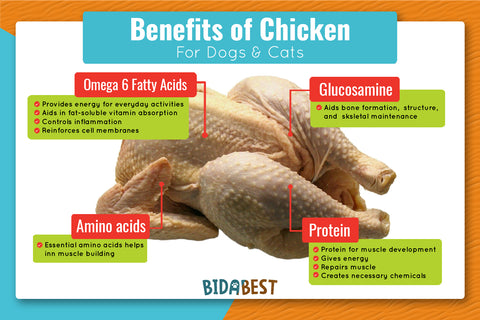 Benefits of chicken for dogs and cats.