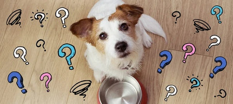 How Much Should You Feed Your Puppy