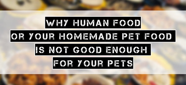 Why human food and homemade pet food is bad for your pets