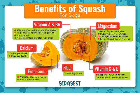 Is Squash Good For Dogs