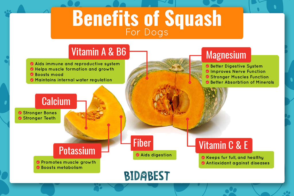 Benefits of Squash for Dogs