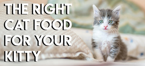 The Right Cat Food For Your Kitty