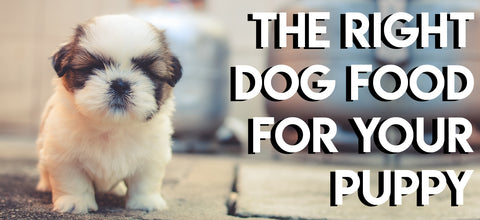 The Right Dog Food For Puppies