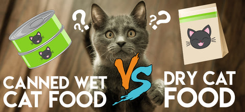 Canned Wet Cat Food Versus Dry Cat Food