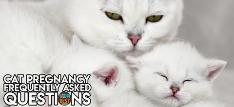 Frequently asked questions about cat pregnancies.