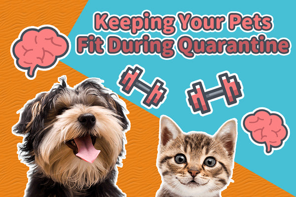 Keeping your pets mentally and physically fit during quarantine