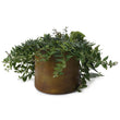Zaroli Planter in mustard | Home & Living inspiration | URBANARA