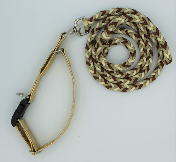 Hint of Gold Paracord leash with attached Martingale Collar