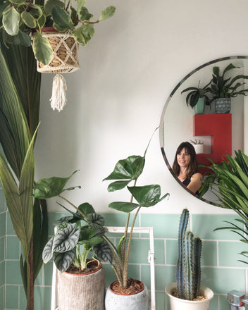 Water & Light Plant Shop The Plant PeopleⓇ Blog Sarah (@theplantrescuer) from the UK