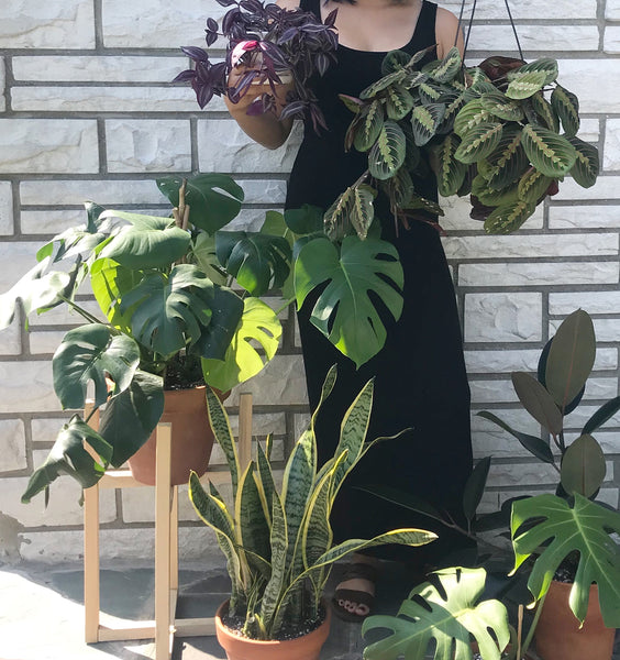 BELINDA (@PLANTLOVERSONLY) - QUEENS, NY