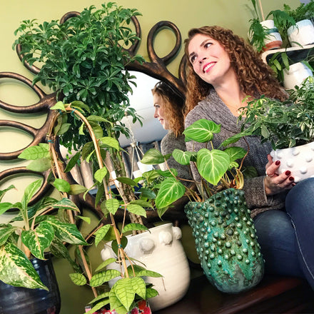 Water & Light Plant Shop The Plant PeopleⓇ Blog Jess (@jessicasjungle) from Hudsonville, MI