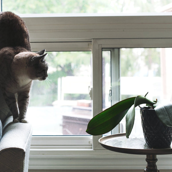 TOP HITS IN PET FRIENDLY PLANTS
