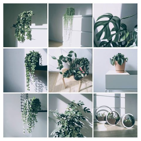 Water & Light Plant Shop's The Plant PeopleⓇ Blog with Lore's plants at home