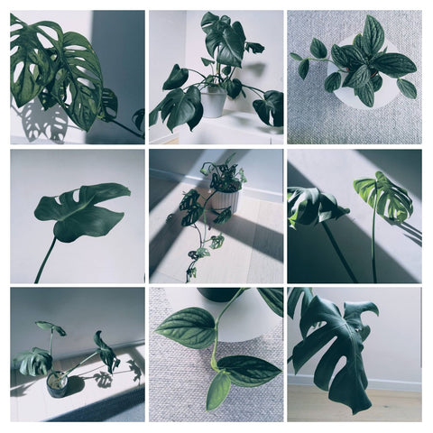 Water & Light Plant Shop's The Plant PeopleⓇ Blog with Lore's plant collection