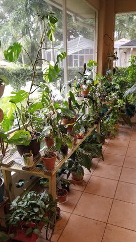 Water & Light Plant Shop's The Plant PeopleⓇ Blog with Bethany's plant collection