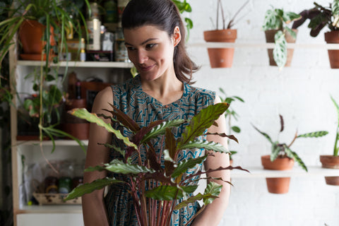 Water & Light Plant Shop's The Plant PeopleⓇ Blog with Summer Rayne Oakes with her plant collection at home in Brooklyn