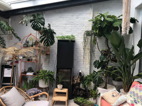 Water & Light Plant Shop's The Plant PeopleⓇ Blog with John's plant collection