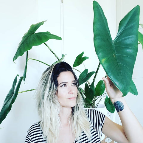 Water & Light Plant Shop The Plant PeopleⓇ Blog Miriam from Switzerland