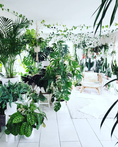 Water & Light Plant Shop The Plant PeopleⓇ Blog Miriam's home