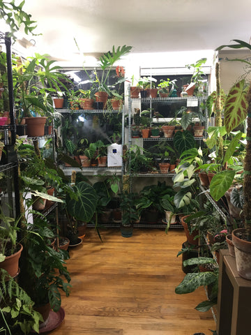 Water & Light Plant Shop's The Plant PeopleⓇ Blog with Kristiana's plant collection