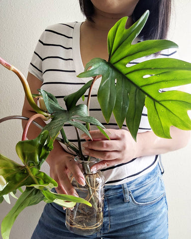 Water & Light Plant Shop's The Plant PeopleⓇ Blog with Hong-Ah and one of her plants