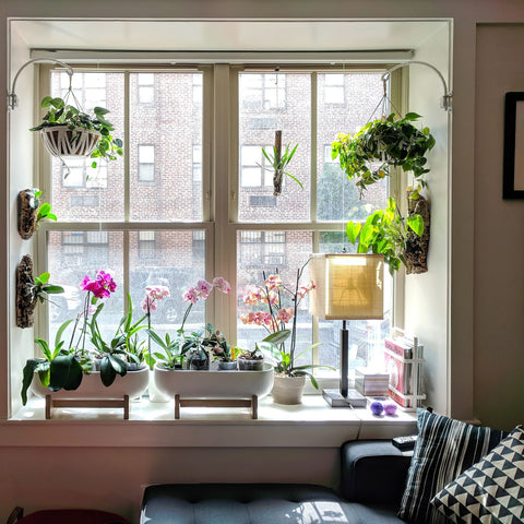 Water & Light Plant Shop's The Plant PeopleⓇ Blog with Alicia and Cielo's plant collection