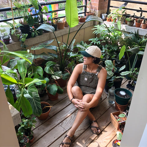 Water & Light Plant Shop's The Plant PeopleⓇ Blog with Sue and her plant collection