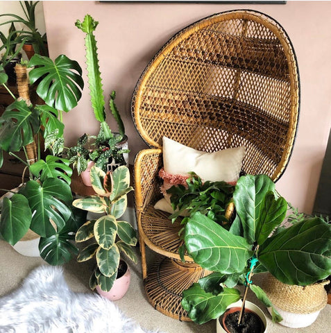 Water & Light Plant Shop's The Plant PeopleⓇ Blog with Anna's plant collection