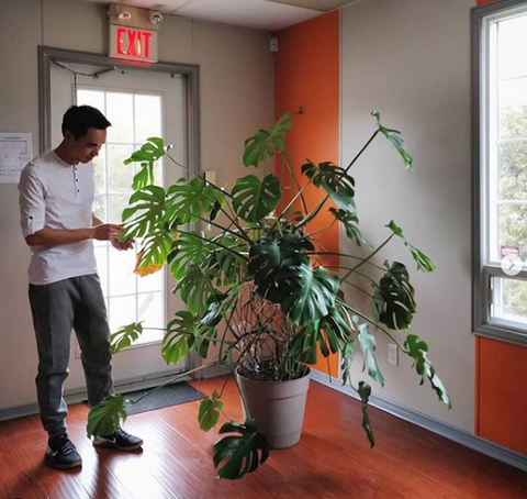 Water & Light Plant Shop's The Plant PeopleⓇ Blog with Darryl and his monstera