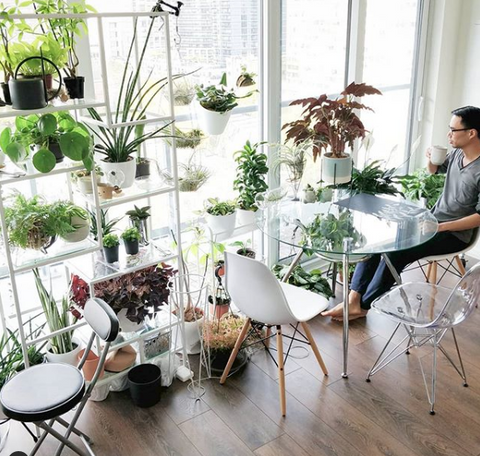 Water & Light Plant Shop's The Plant PeopleⓇ Blog with Darryl and his plant collection at home