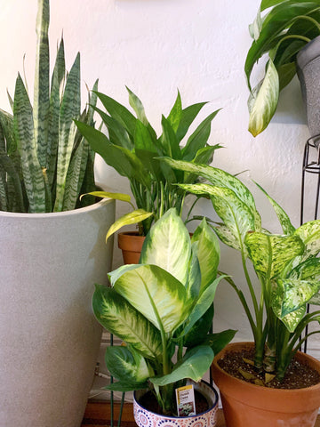 Water & Light Plant Shop's The Plant PeopleⓇ Blog with Julian's collection of plants