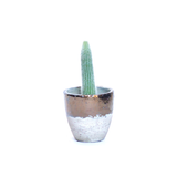 Water & Light Plant Shop Espostoa Melanostele Old Man Cactus Plant in metallic pot