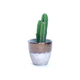 Water & Light Plant Shop Acanthocereus Tetragonus Fairy Castle Cactus Plant in metallic pot