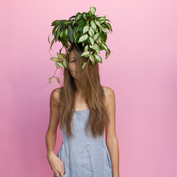 Water & Light Plant Shop girl with Variegated Hoya Carnosa Wax Plant hanging in nursery pot