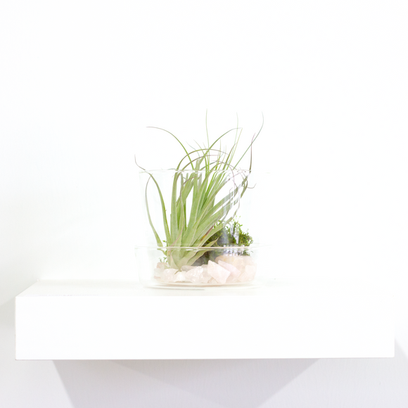Water & Light Plant Shop Crystal Air Plant Terrarium