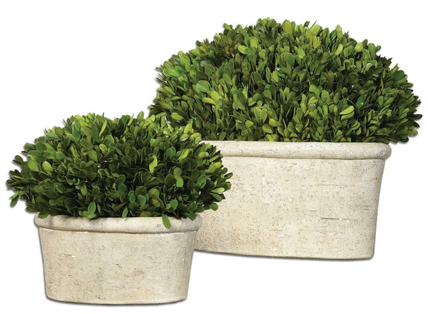 Preserved Boxwood Shrubs