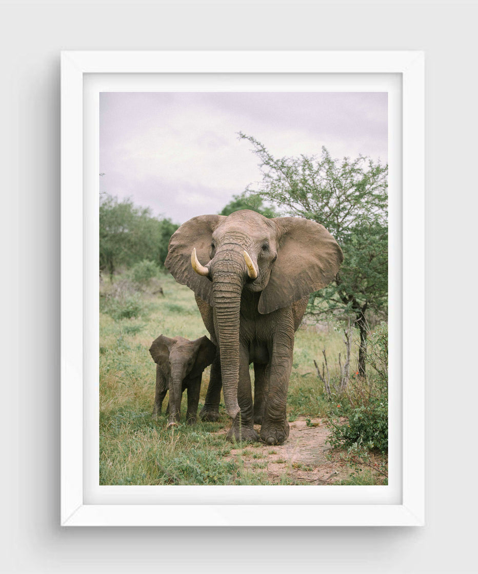 Family #2, Kruger National Park
