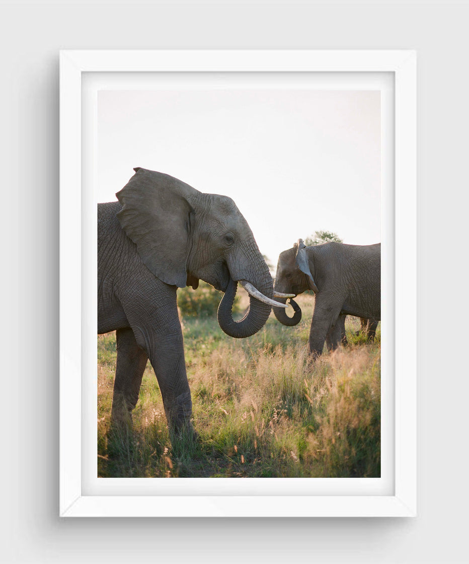 Elephant Family #3, South Africa