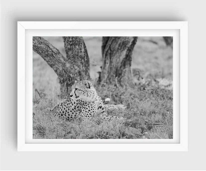 Cheetah #2, South Africa