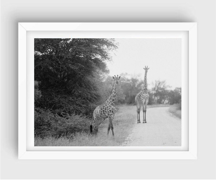 Giraffes #2, Kruger National Park