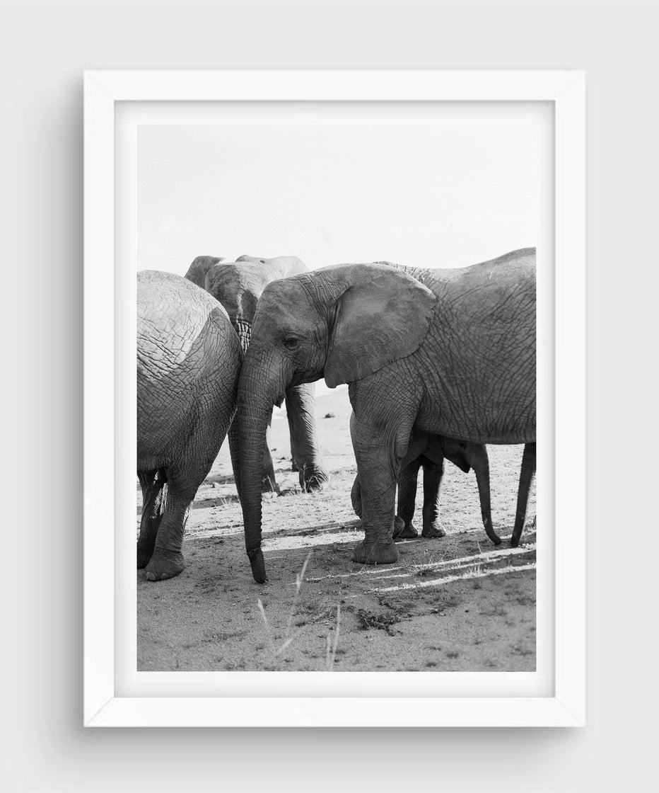 Elephant Family #2, South Africa