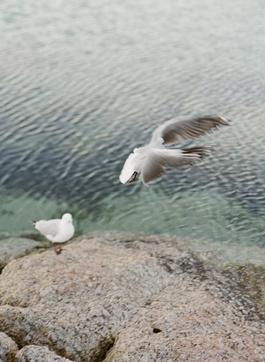 Seagulls #2, Cape Town