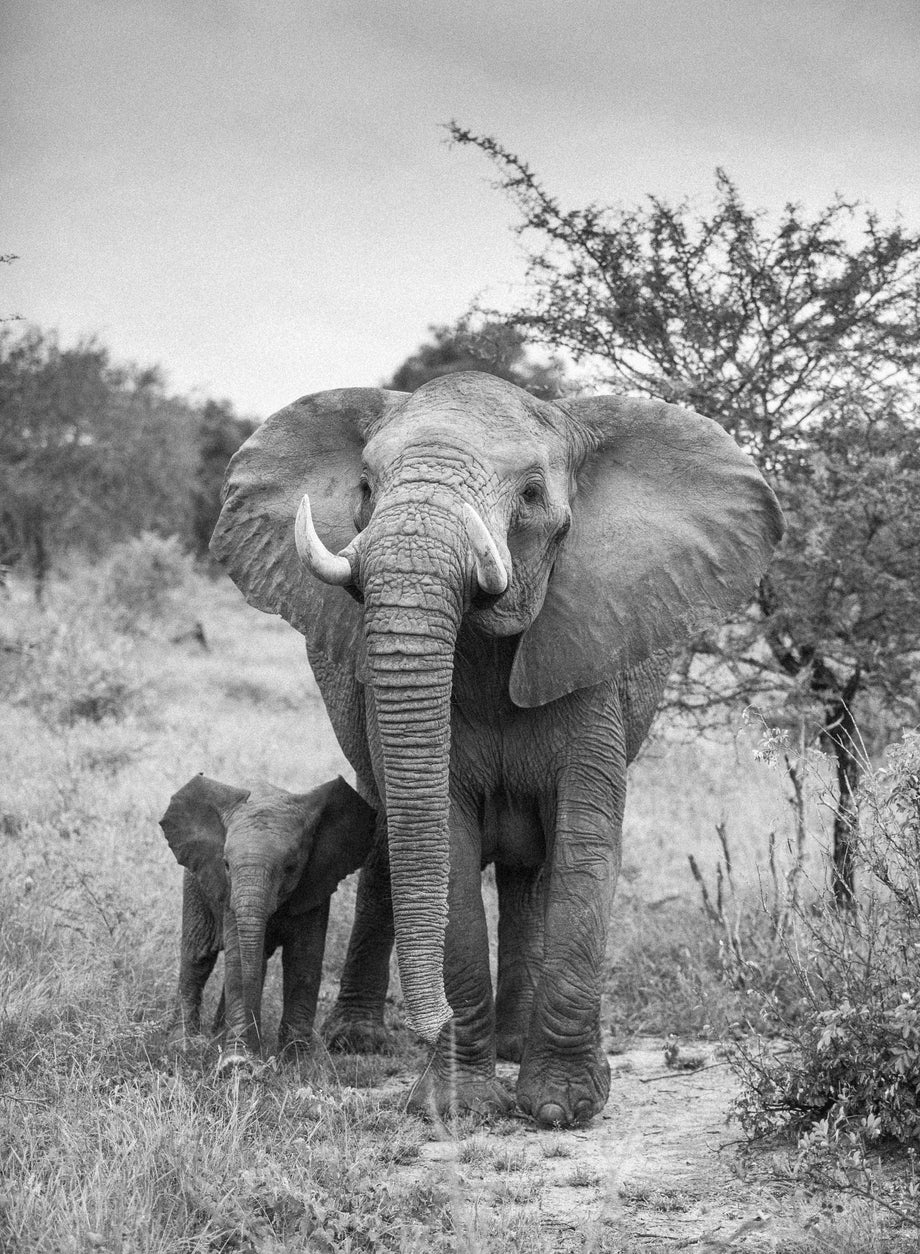 Family #1, Kruger National Park