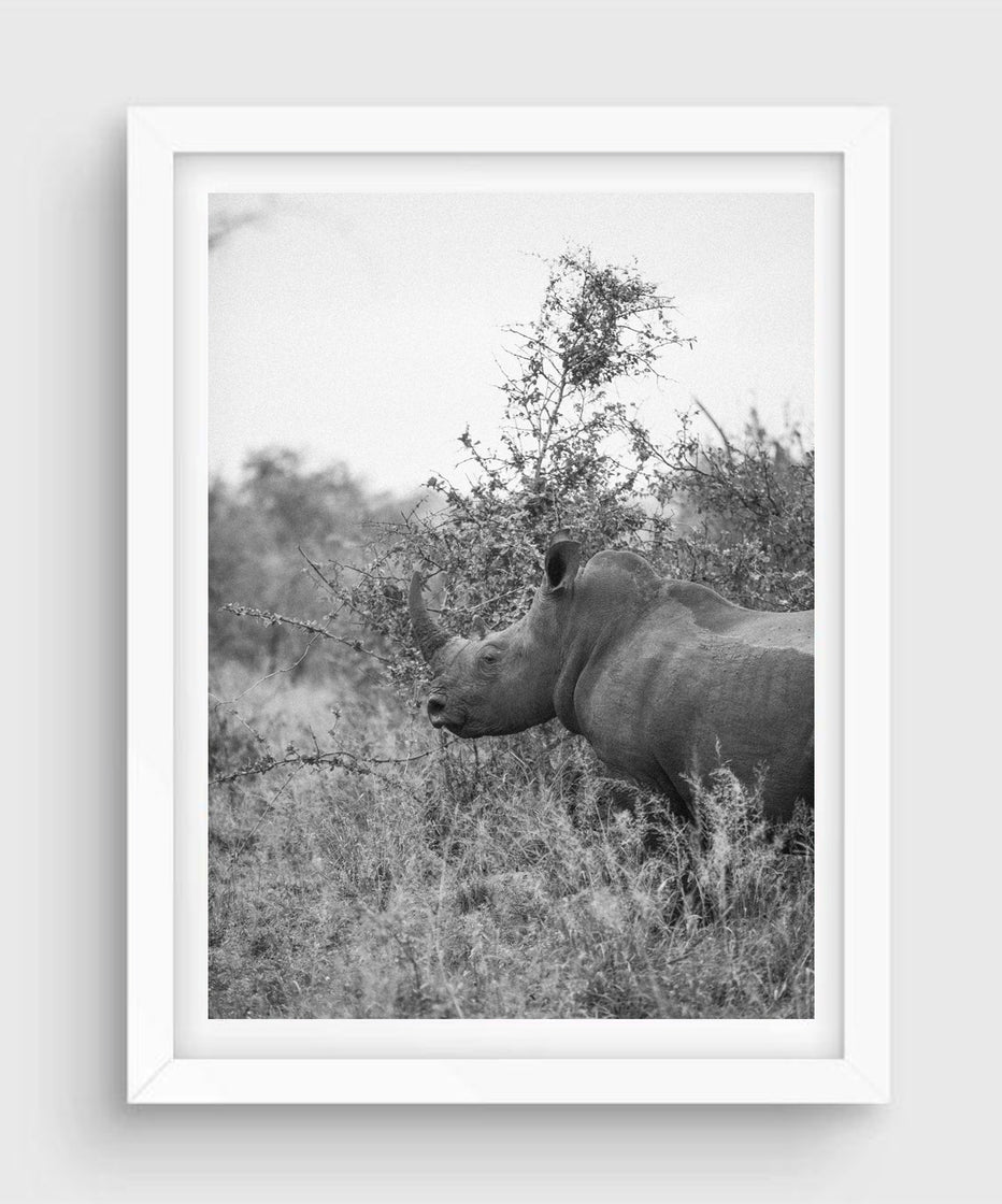 Rhino, Kruger National Park