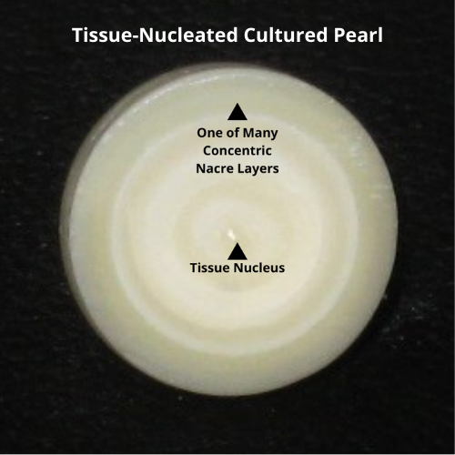 Tissue-Nucleated Freshwater Cultured Pearl