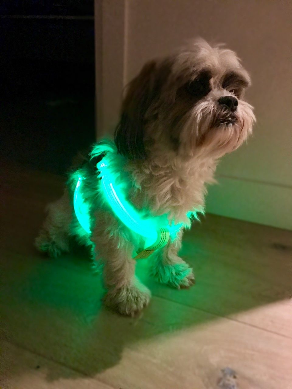 The LED Pup Vest