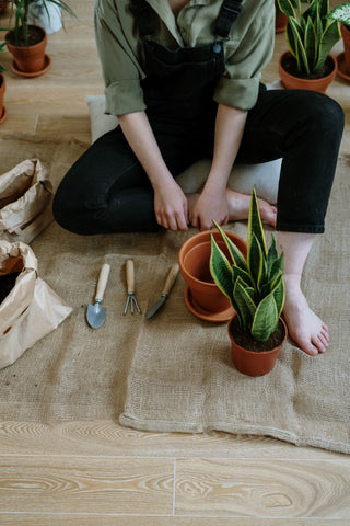 Image of person seated on a mat with a small shovel and a snake plant in a terracotta pot. Photo by cottonbro from Pexels