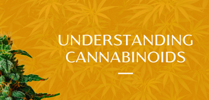 Understanding Common Cannabinoids